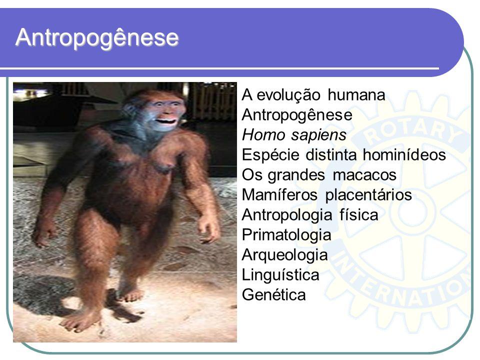 Antropogênese A evolução humana Antropogênese Homo sapiens