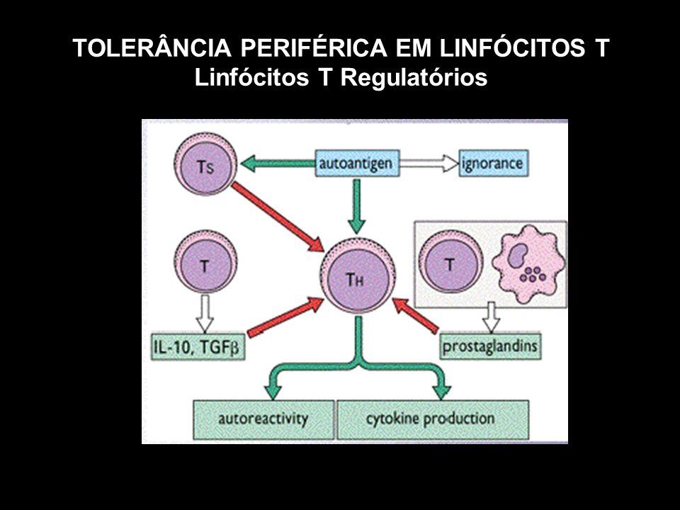 TOLERÂNCIA PERIFÉRICA EM LINFÓCITOS T Linfócitos T Regulatórios
