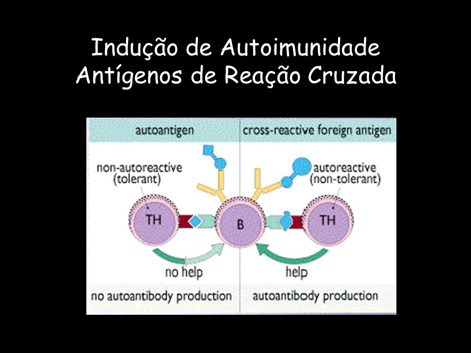 Indução de Autoimunidade Antígenos de Reação Cruzada