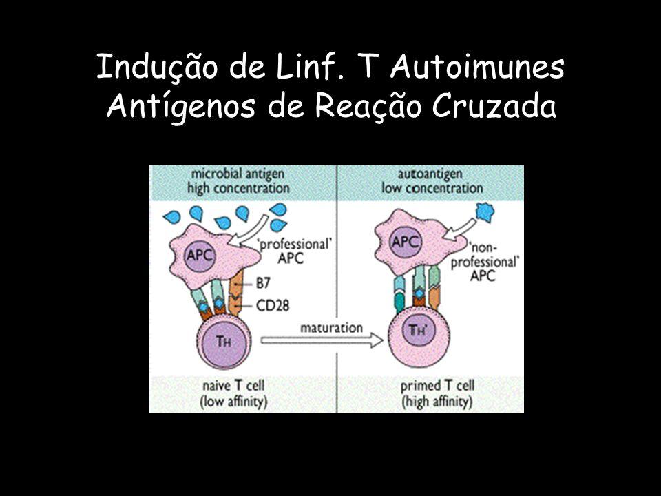 Indução de Linf. T Autoimunes Antígenos de Reação Cruzada