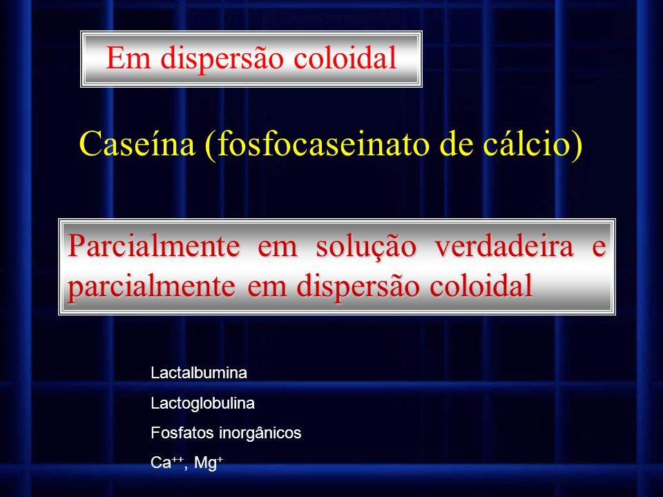 Caseína (fosfocaseinato de cálcio)