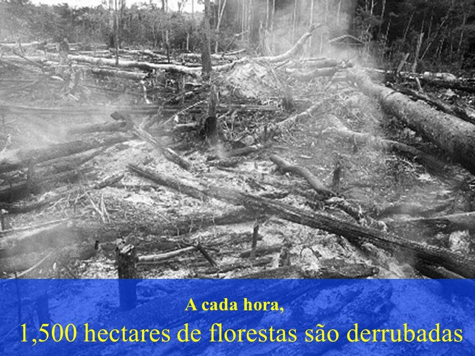 1,500 hectares de florestas são derrubadas