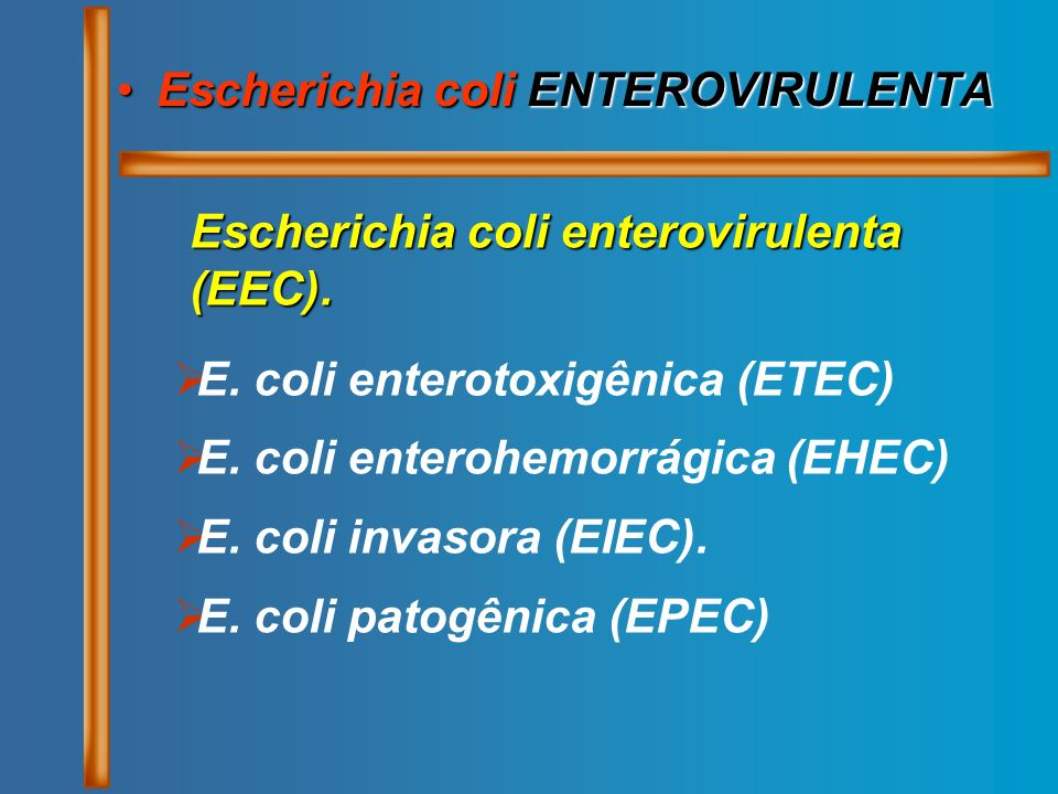 Escherichia coli ENTEROVIRULENTA