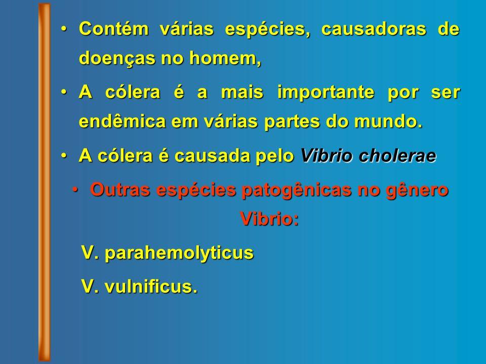 Outras espécies patogênicas no gênero Vibrio: