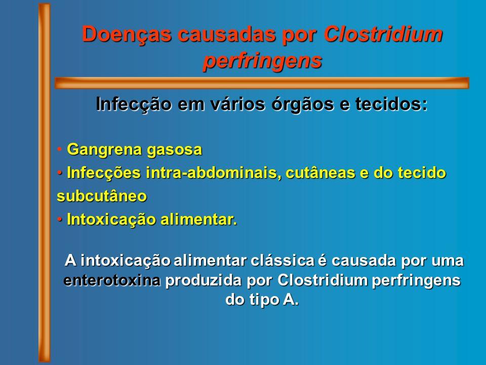 Doenças causadas por Clostridium perfringens