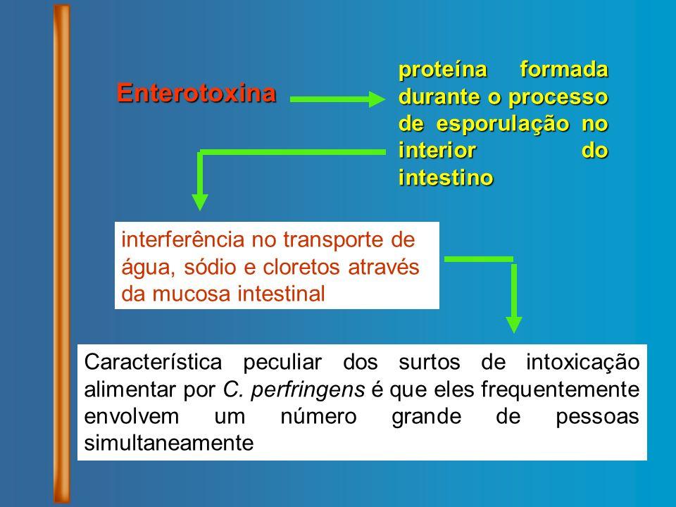 proteína formada durante o processo de esporulação no interior do intestino