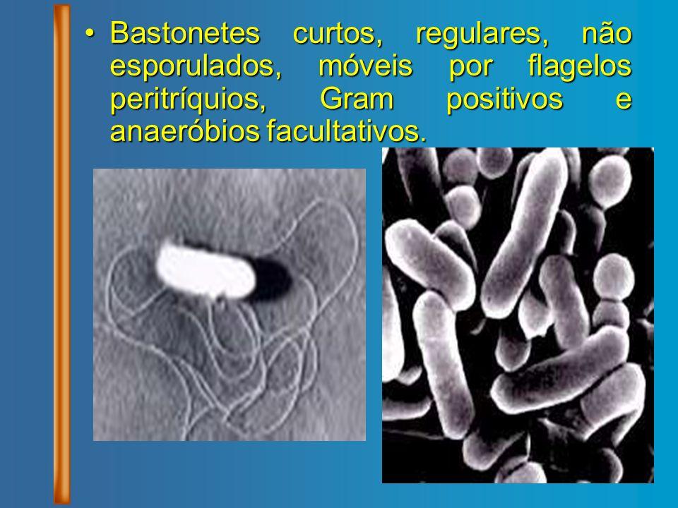 Bastonetes curtos, regulares, não esporulados, móveis por flagelos peritríquios, Gram positivos e anaeróbios facultativos.