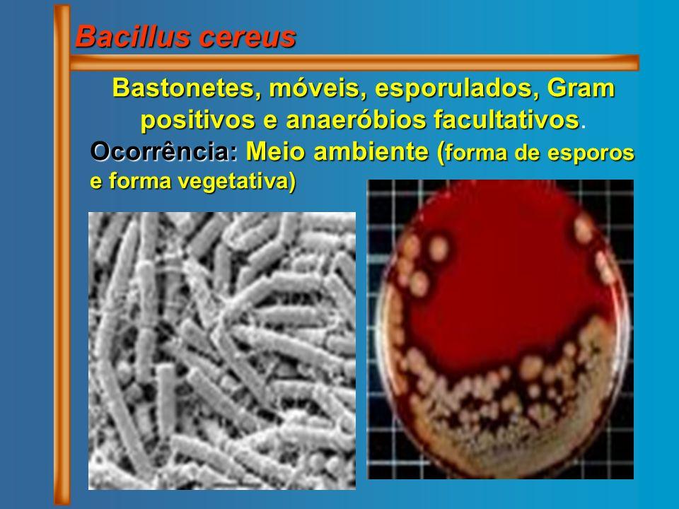 Bacillus cereus Bastonetes, móveis, esporulados, Gram positivos e anaeróbios facultativos.