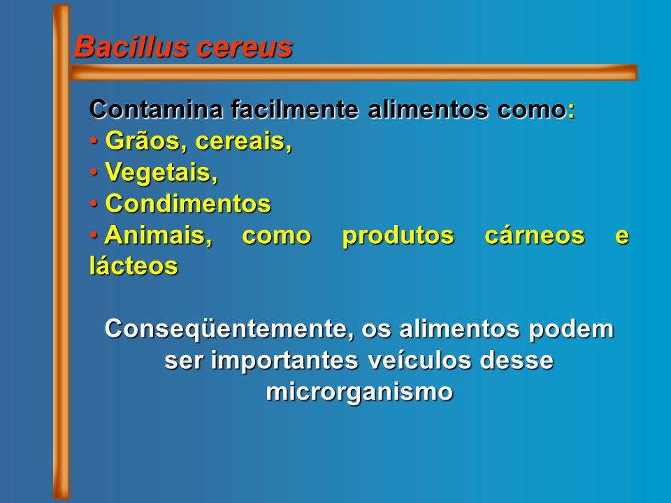 Bacillus cereus Contamina facilmente alimentos como: Grãos, cereais,