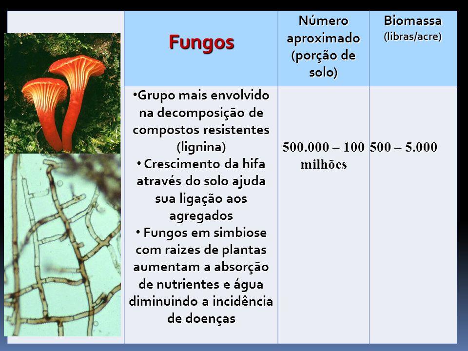 Fungos Número aproximado (porção de solo) Biomassa (libras/acre)