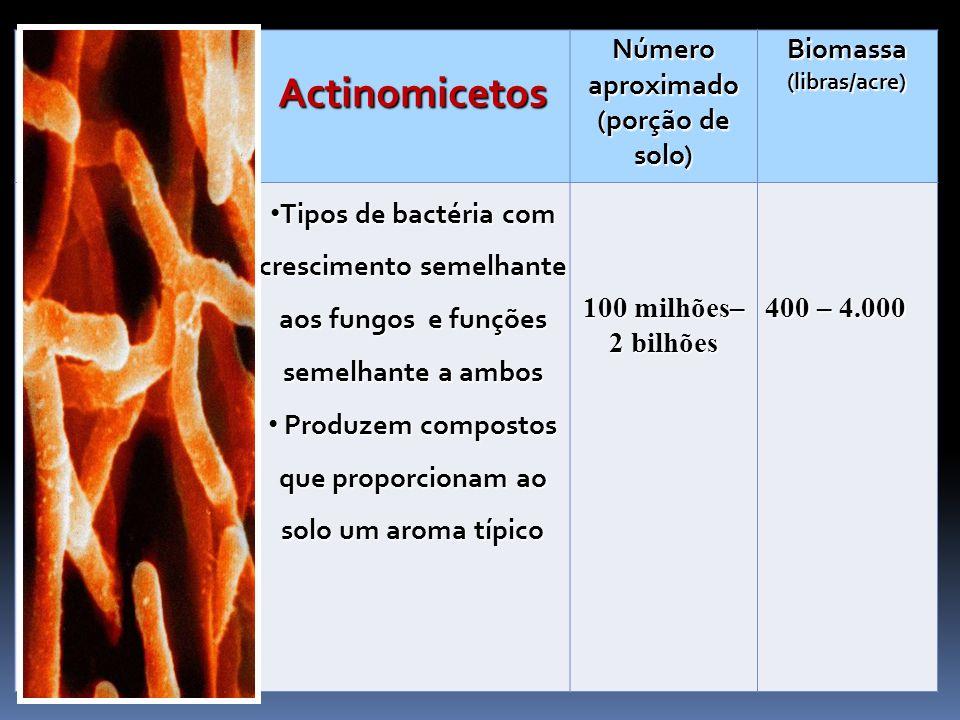 Actinomicetos Número aproximado (porção de solo)