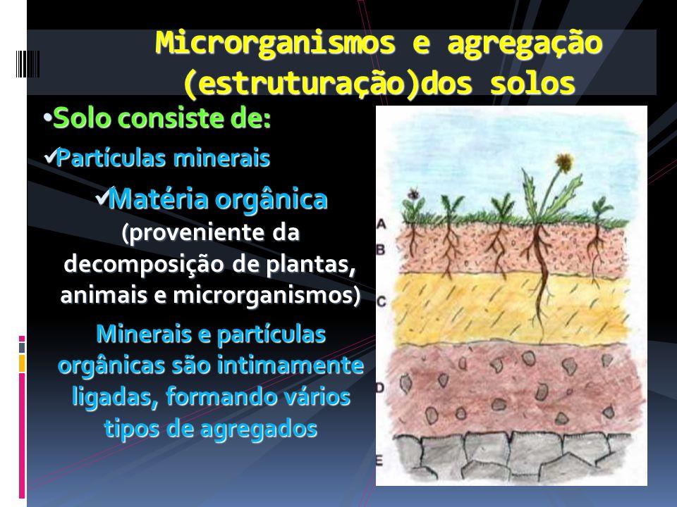 Microrganismos e agregação (estruturação)dos solos