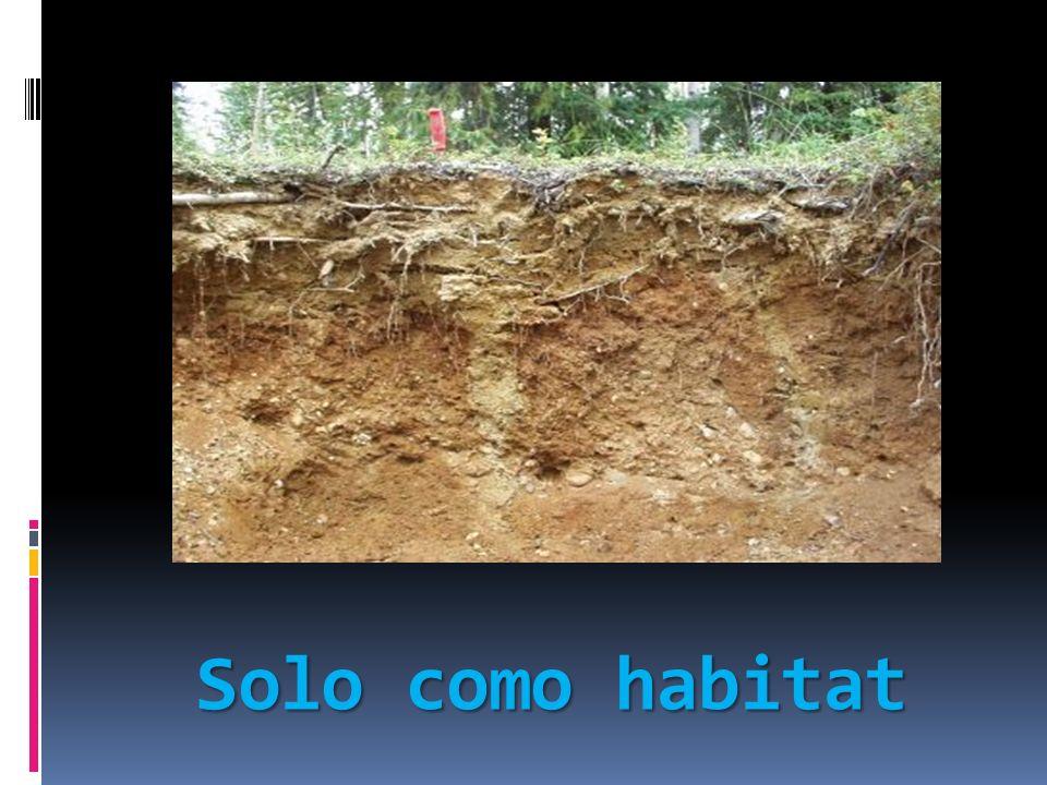 Solo como habitat