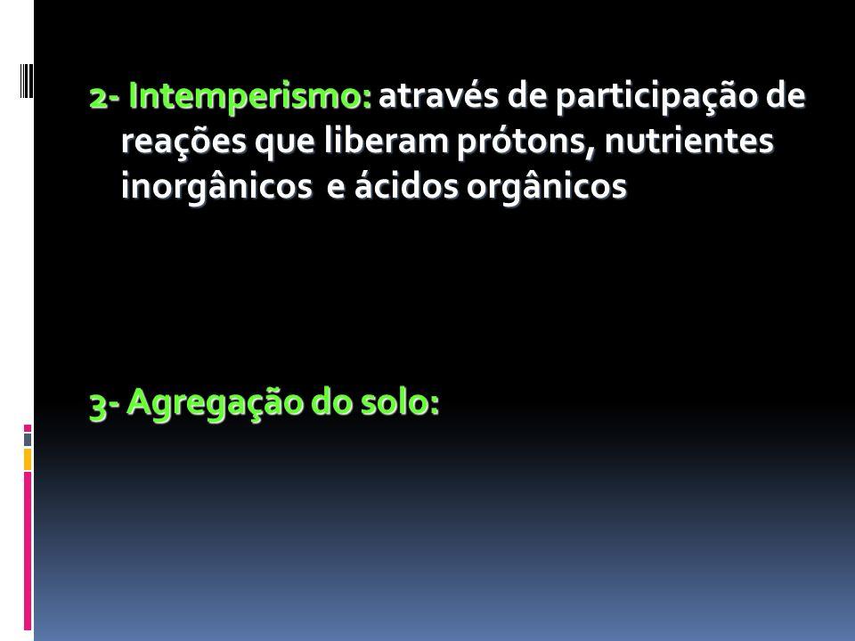 2- Intemperismo: através de participação de reações que liberam prótons, nutrientes inorgânicos e ácidos orgânicos