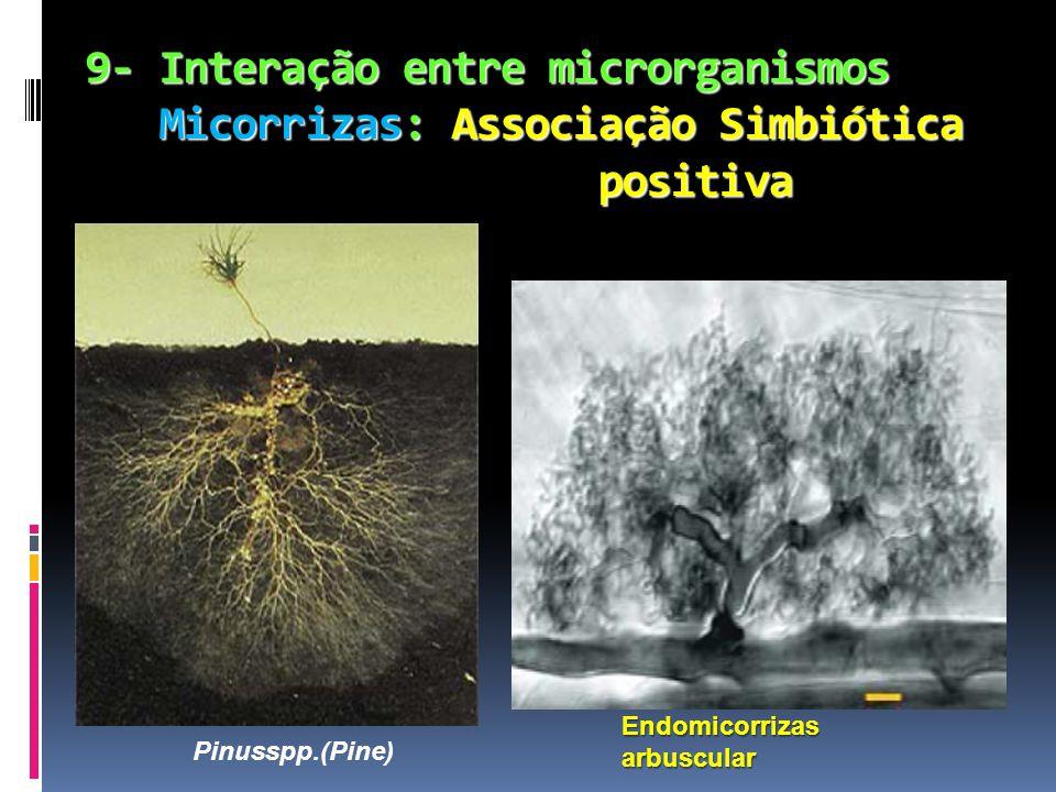 9- Interação entre microrganismos Micorrizas: Associação Simbiótica positiva