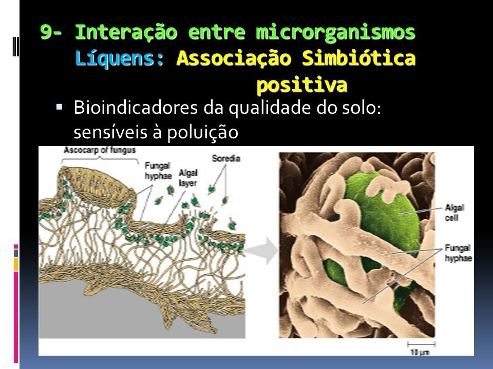 9- Interação entre microrganismos Líquens: Associação Simbiótica positiva