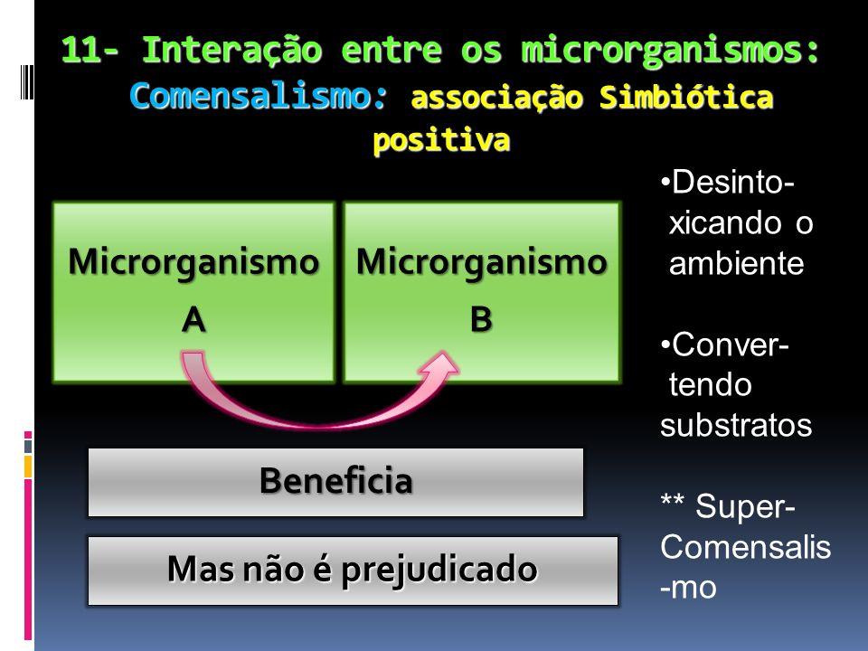 11- Interação entre os microrganismos: Comensalismo: associação Simbiótica positiva