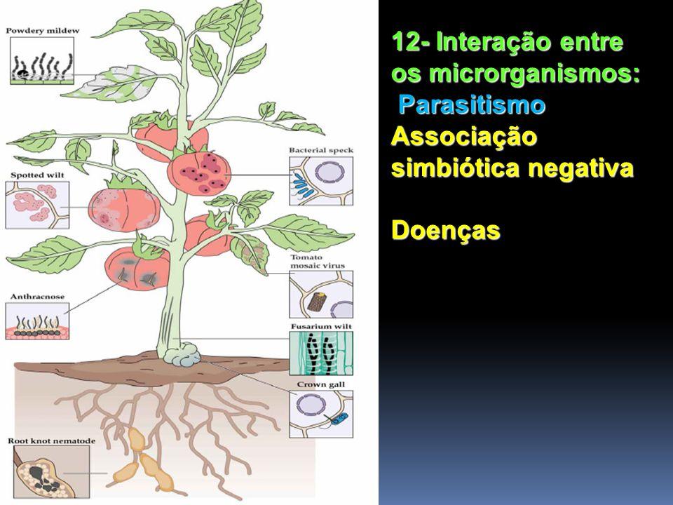 12- Interação entre os microrganismos: Parasitismo Associação simbiótica negativa