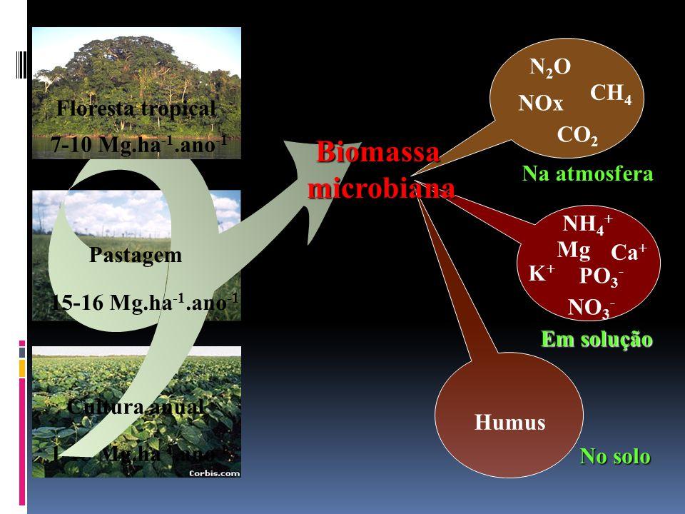 Biomassa microbiana N2O CH4 NOx Floresta tropical CO2
