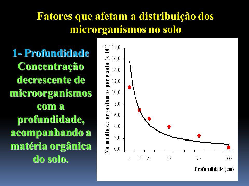 Fatores que afetam a distribuição dos microrganismos no solo