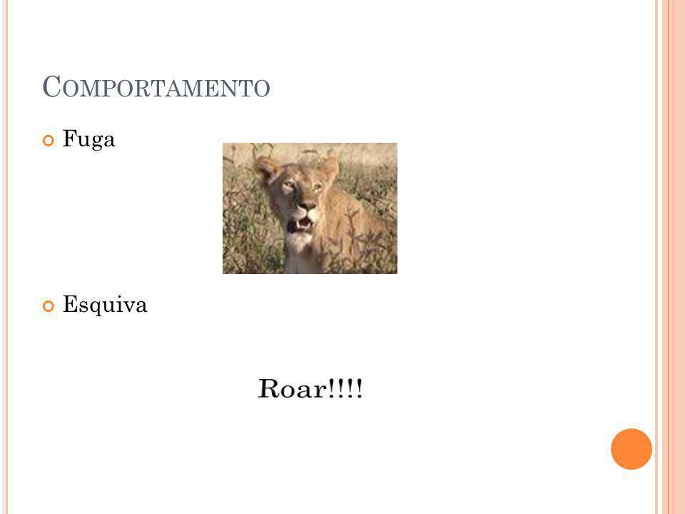 Comportamento Fuga Esquiva Roar!!!!