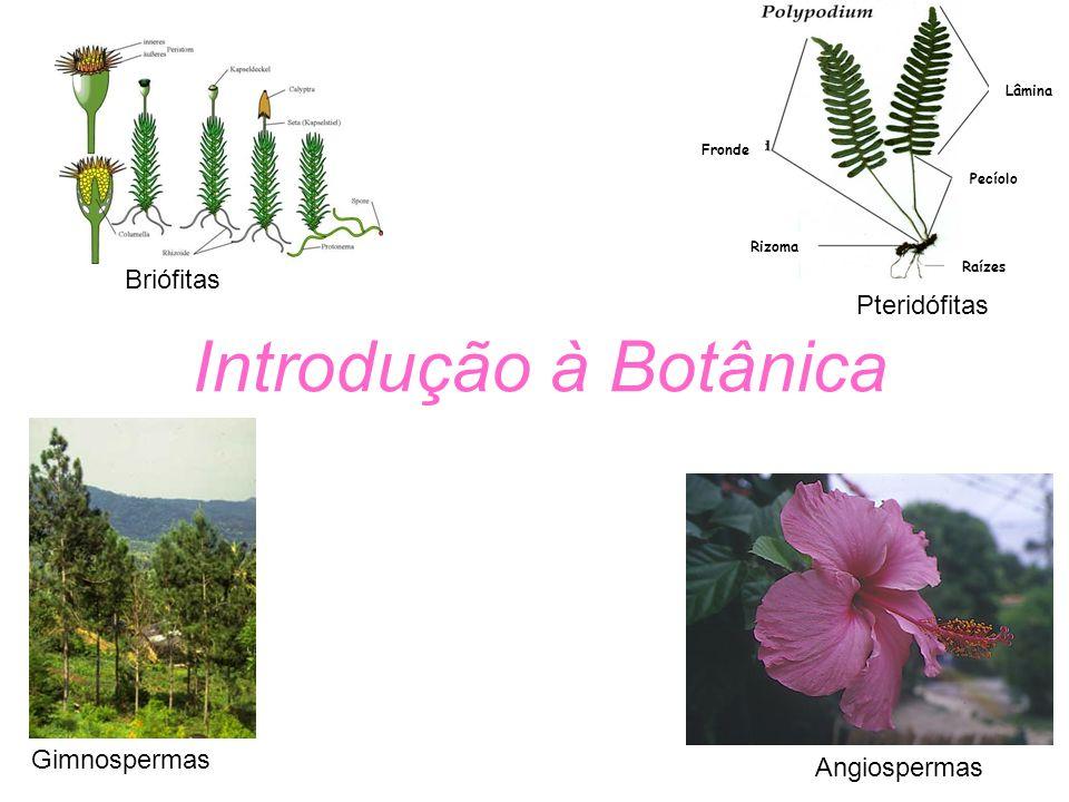 Introdução à Botânica Briófitas Pteridófitas Gimnospermas Angiospermas