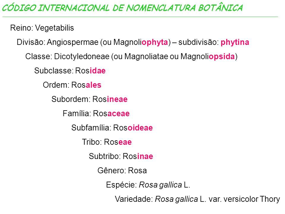 CÓDIGO INTERNACIONAL DE NOMENCLATURA BOTÂNICA