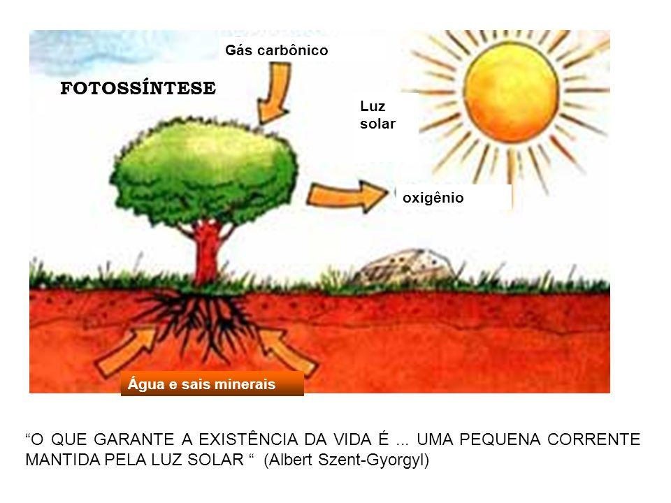 FOTOSSÍNTESE Água e sais minerais. oxigênio. Gás carbônico. Luz solar.