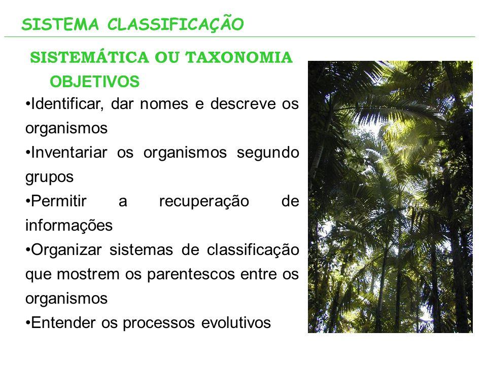 SISTEMA CLASSIFICAÇÃO