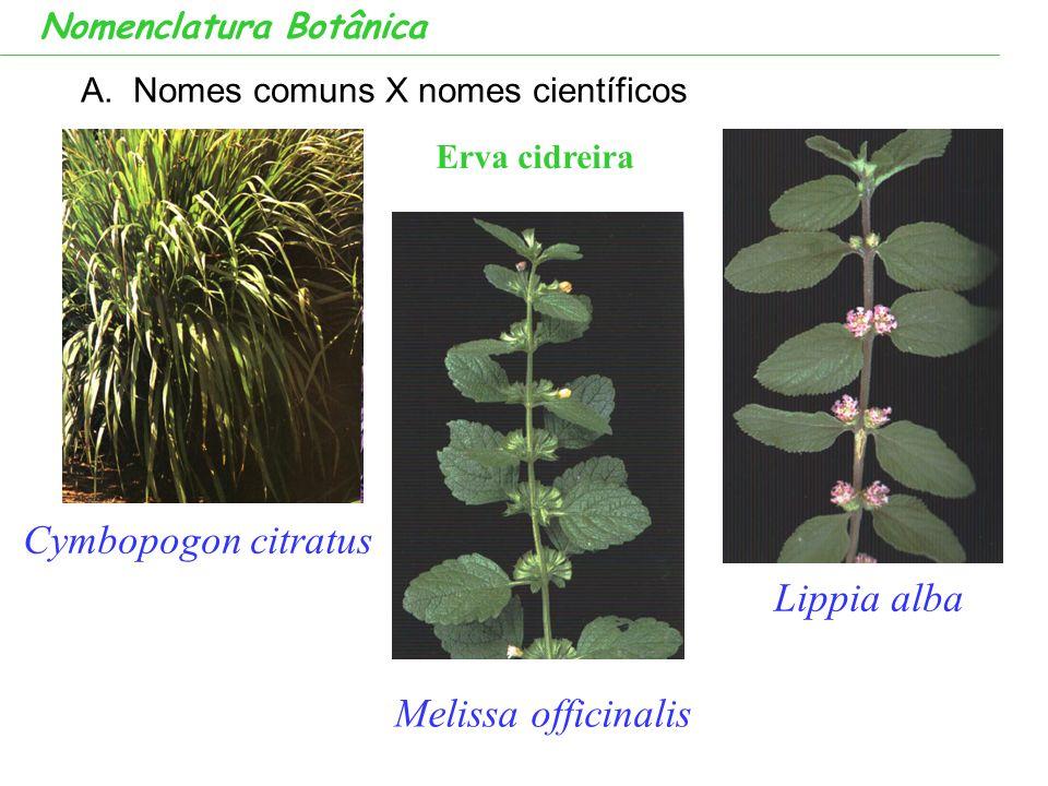 Cymbopogon citratus Lippia alba Melissa officinalis