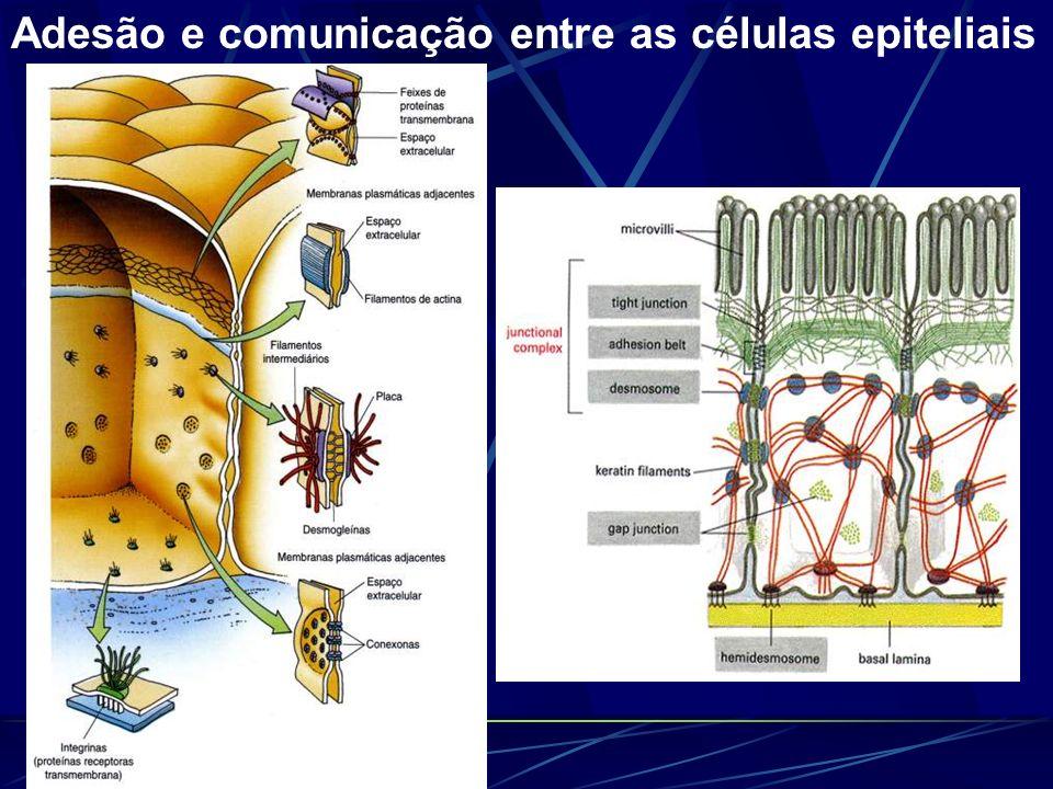 Adesão e comunicação entre as células epiteliais