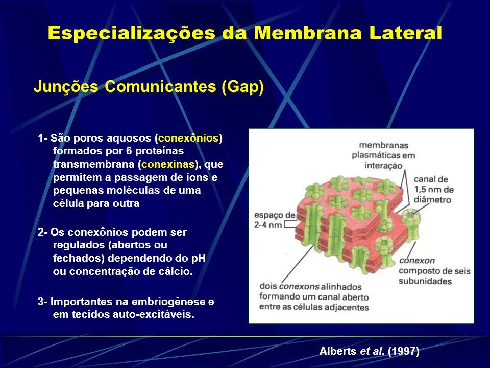 Especializações da Membrana Lateral