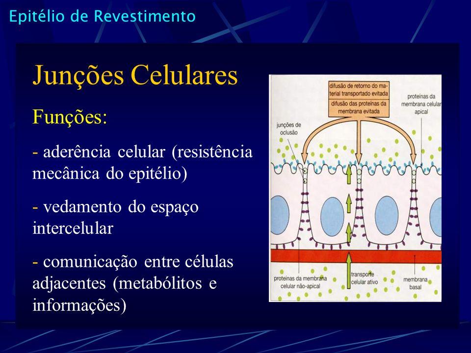 Junções Celulares Funções: