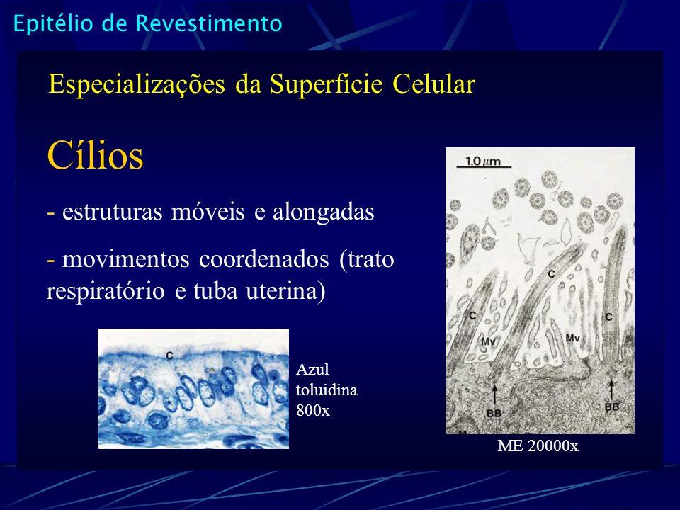 Cílios Especializações da Superfície Celular