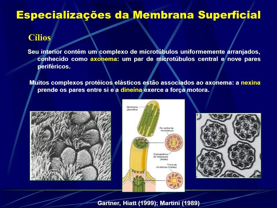 Especializações da Membrana Superficial