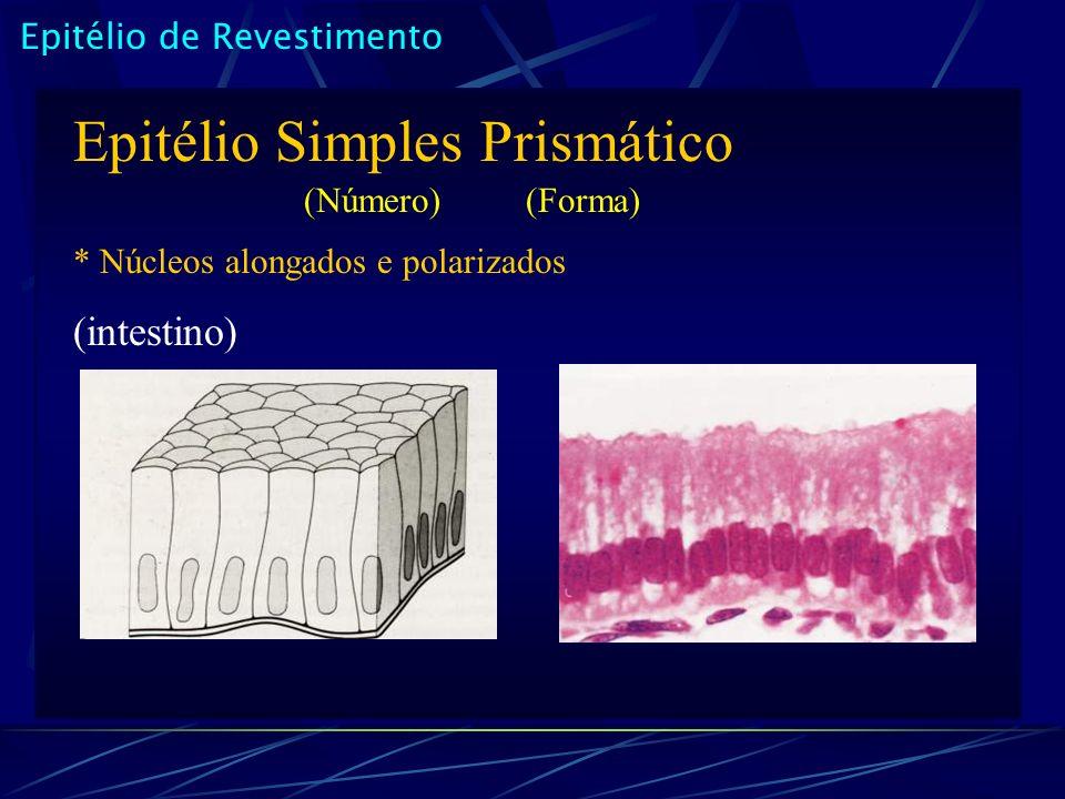 Epitélio Simples Prismático
