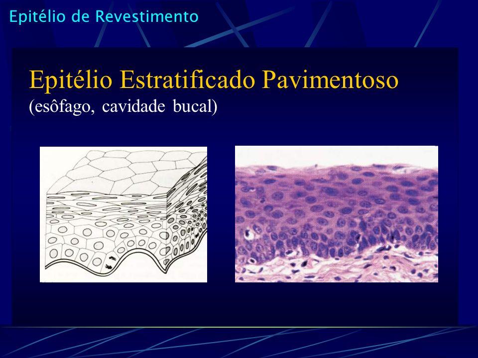 Epitélio Estratificado Pavimentoso (esôfago, cavidade bucal)