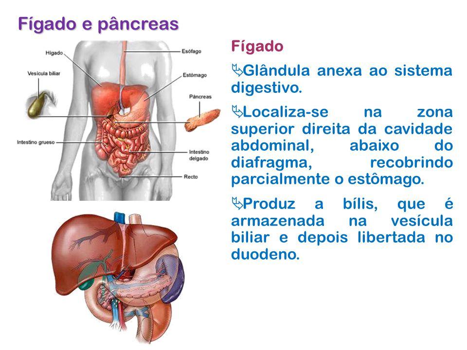 Fígado e pâncreas Fígado Glândula anexa ao sistema digestivo.