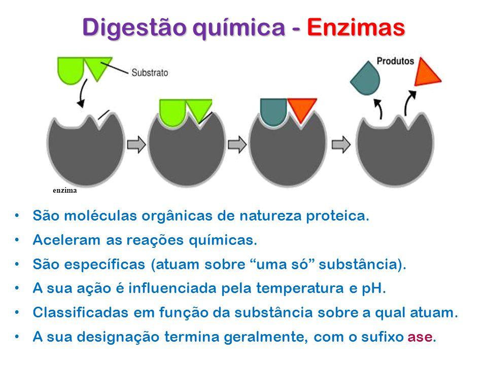 Digestão química - Enzimas