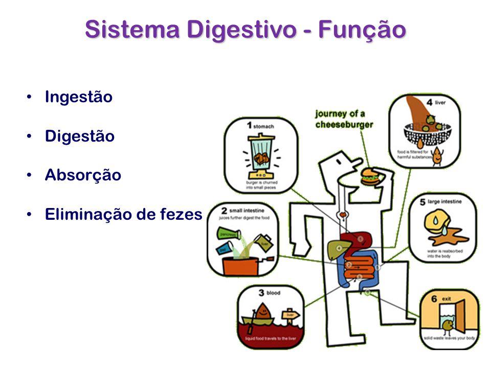 Sistema Digestivo - Função