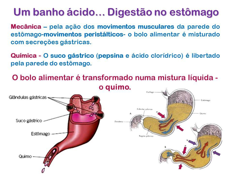 Um banho ácido… Digestão no estômago