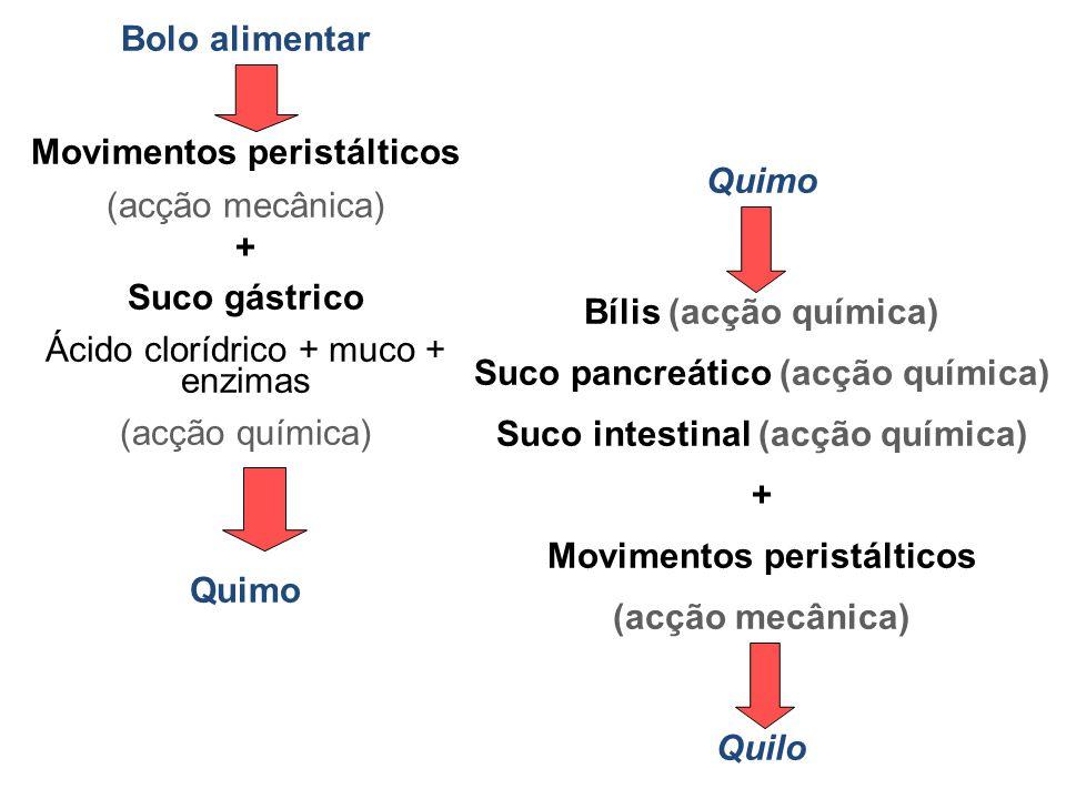 Movimentos peristálticos (acção mecânica) + Suco gástrico