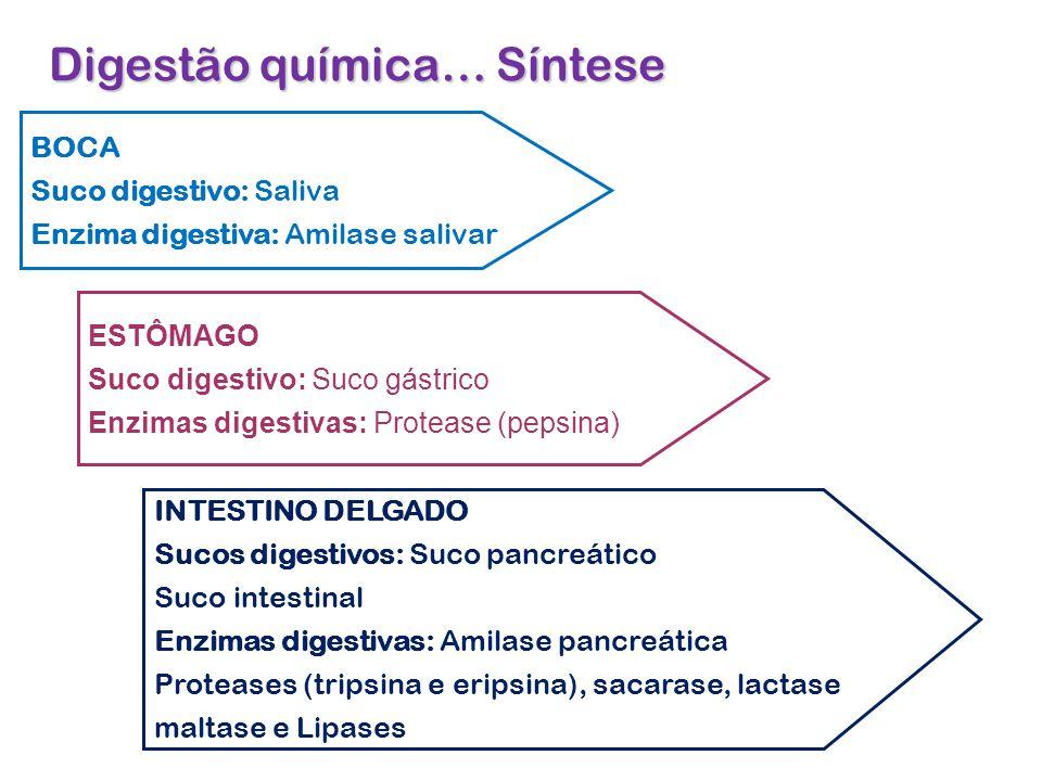 Digestão química… Síntese