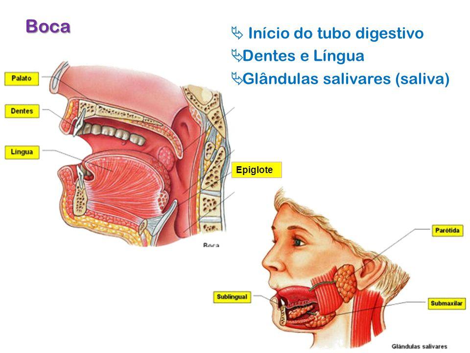 Boca  Início do tubo digestivo Dentes e Língua