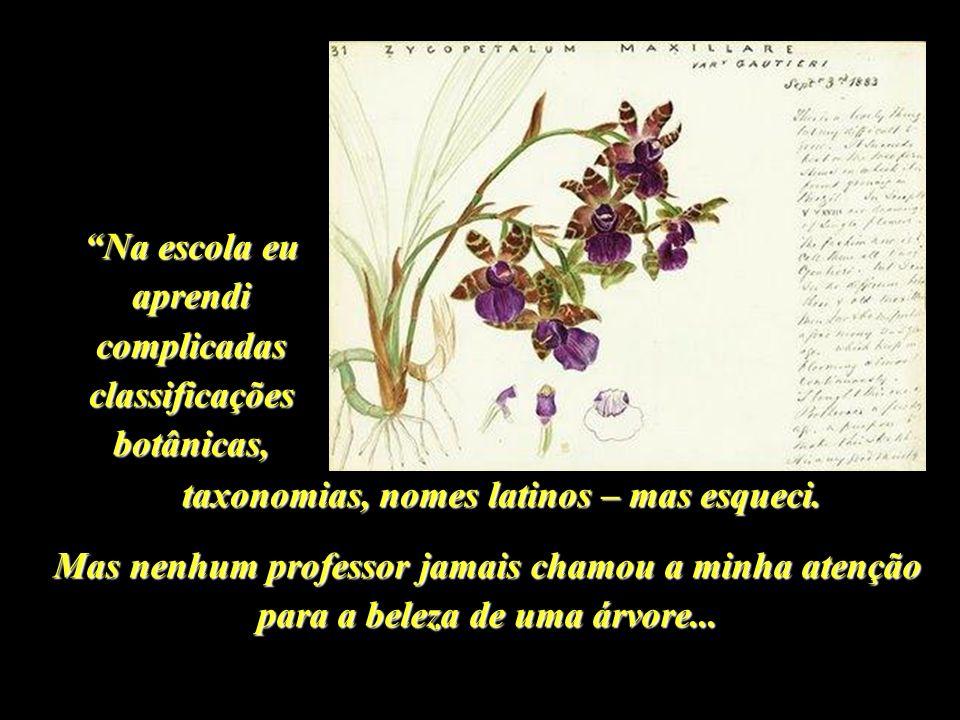 Na escola eu aprendi complicadas classificações botânicas,