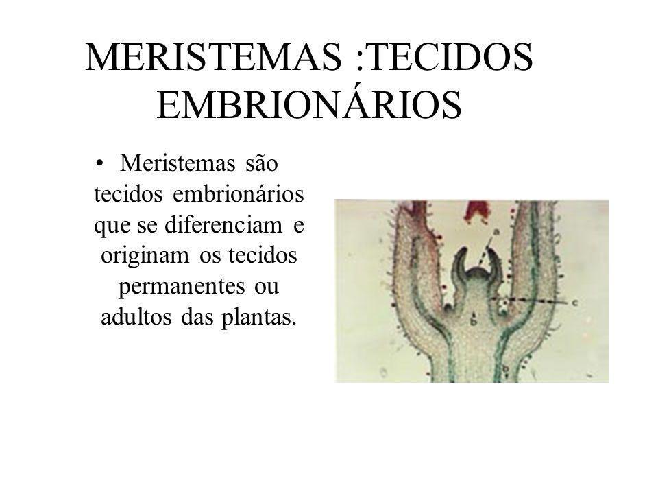 MERISTEMAS :TECIDOS EMBRIONÁRIOS