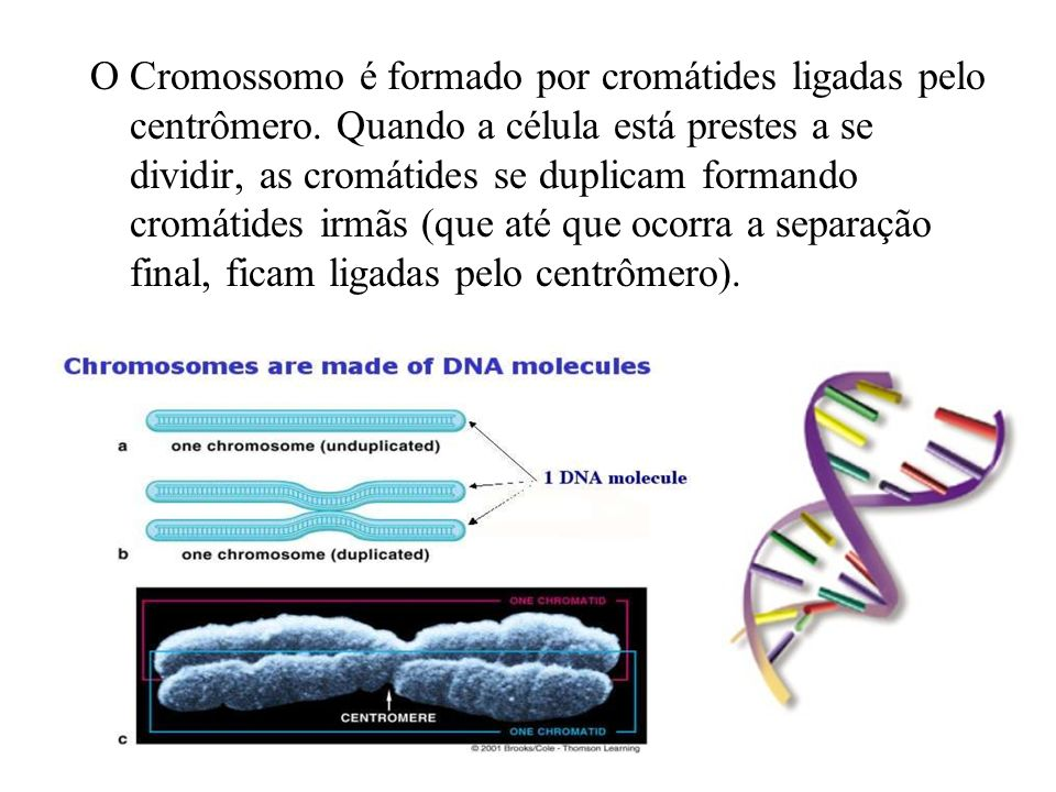 O Cromossomo é formado por cromátides ligadas pelo centrômero