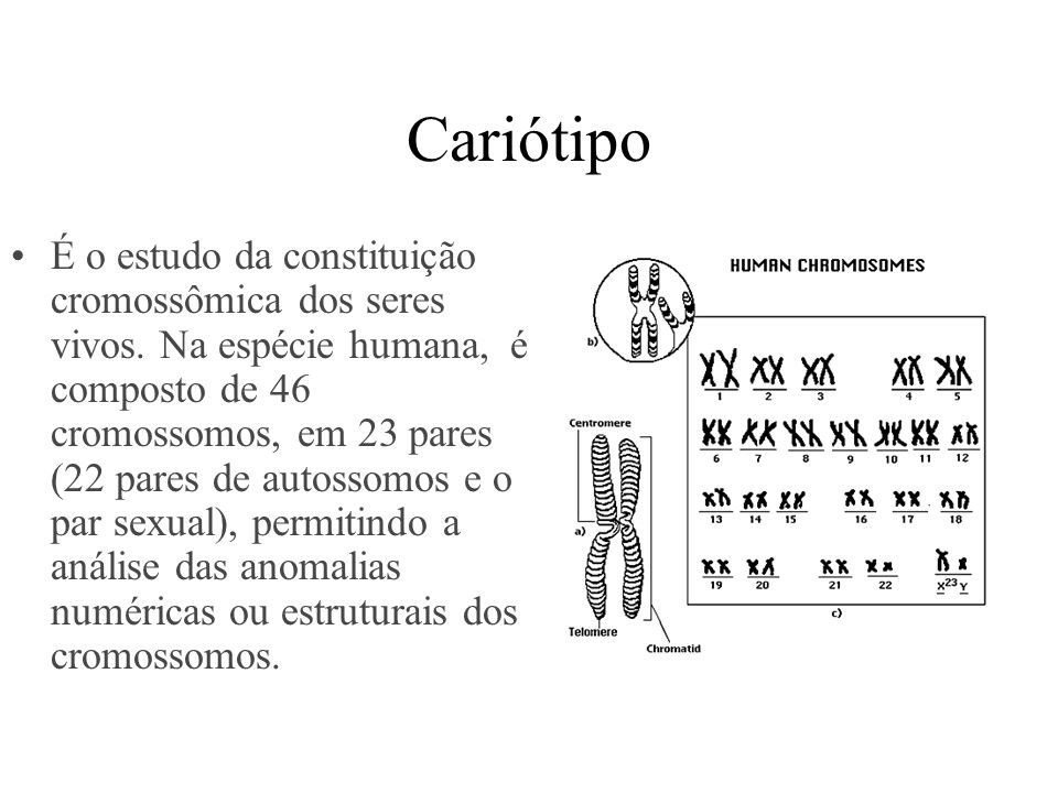 Cariótipo