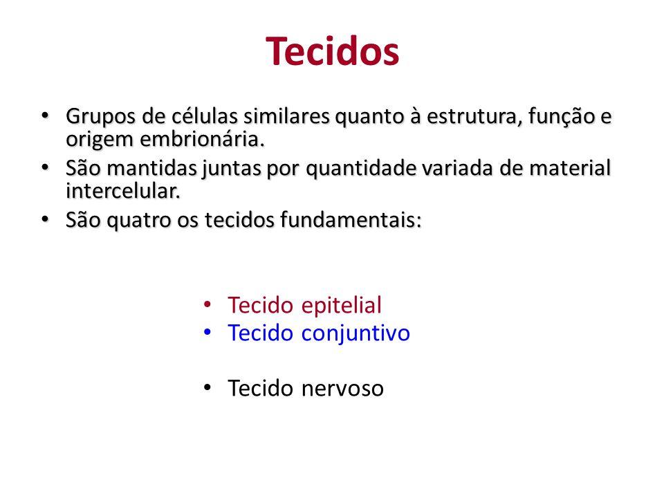 Tecidos Tecido epitelial Tecido conjuntivo Tecido muscular