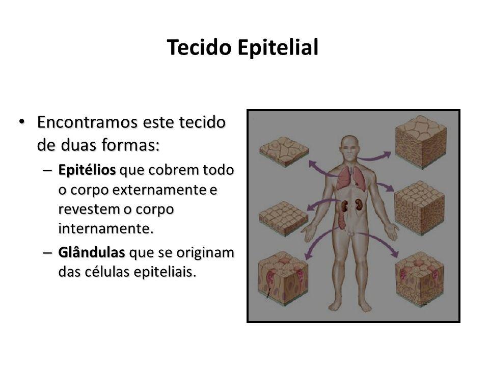 Tecido Epitelial Encontramos este tecido de duas formas:
